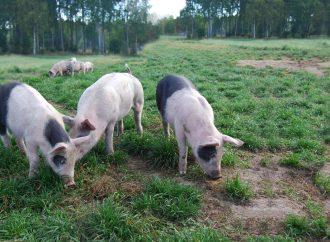 Dödlig djursjukdom kan sprida sig i landet