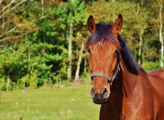 Gotland får hästklinik igen efter två år