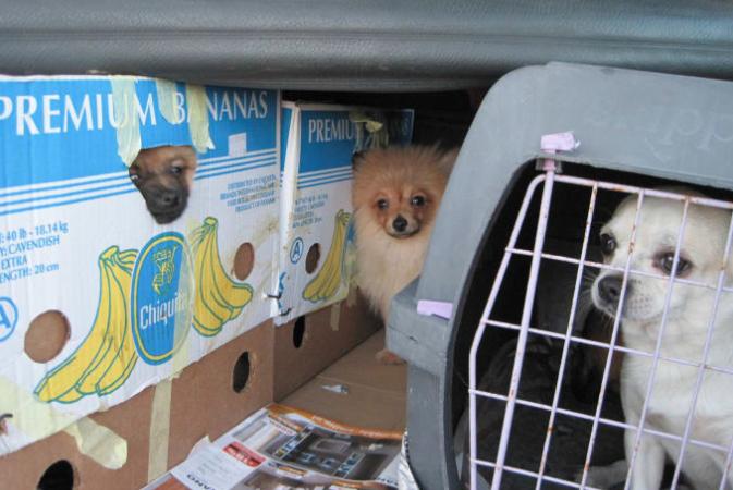 Se upp för olagligt införda hundar