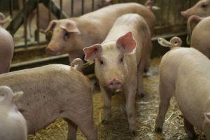 Konsumenten behöver få koll på hur antibiotika används
