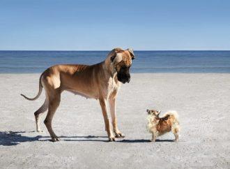 Promenad för välgörenhet på Hundens dag