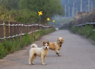 Angående Fantastiska hundar