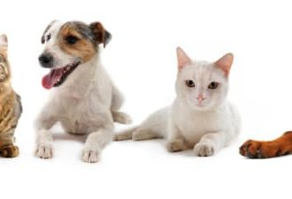 Fortsatt ökning av veterinärmedicinsk biverkningsrapportering