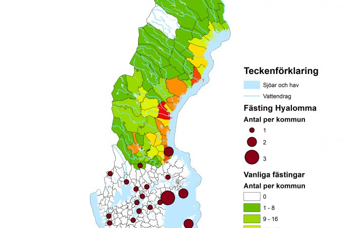 SVA har identifierat en ny fästingart i Sverige
