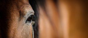 Häst dog på Öland efter veterinärbrist