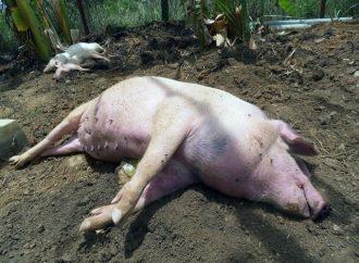 SVA:s sjukdomsövervakningen av vilda djur avbryts