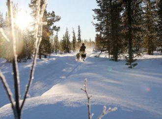 Förändrad verksamhet för Distriktsveterinärerna i norra Lappland