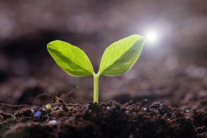 Evidensia siktar på att bli klimatpositiva