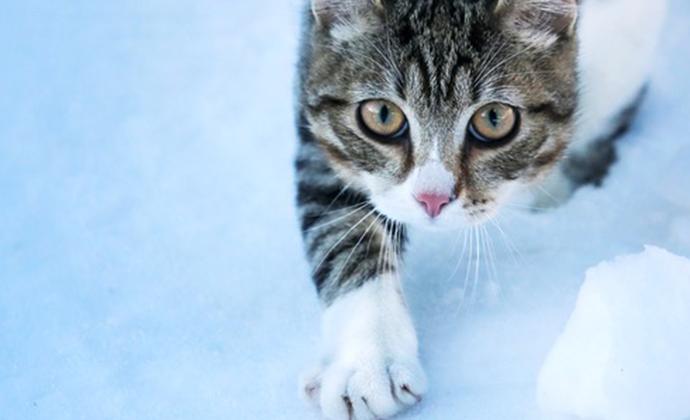 Många katter smittade av salmonella