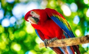 Bornavirus påvisat hos svensk papegoja