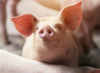 Användningen av antibiotika i djuruppfödningen minskar