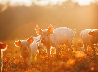Studierna som får medel för bättre djurvälfärd och ökad lönsamhet