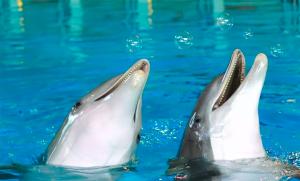 Rabatten för förbundets medlemmar gällande inträde till djurparker har upphört efter besked från Kolmårdens koncern