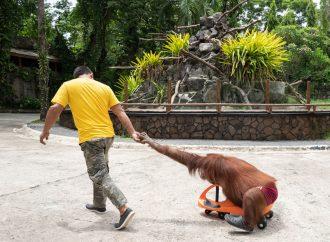 Ny rapport avslöjar rutinmässigt djurplågeri i kända djurparker