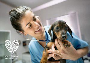 Veterinär sökes till Solstadens Smådjursklinik