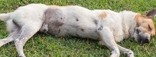Rapport från Norge: Akut hundsjukdom skördar liv