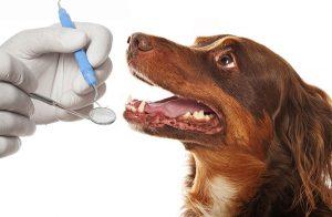 Evidensia utökar satsning på djurtandvård