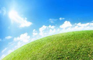 Veterinärerna som sparar in på utsläpp efter klimatsatsning