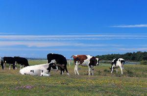 Djursjukvård säkerställs i och med budgetöverenskommelse