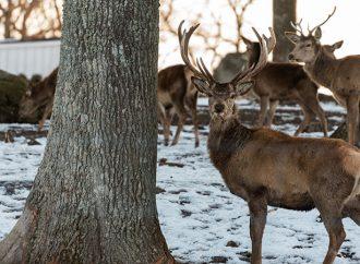 Förvaltning av vilda djur utan forskningssyfte är inte djurförsök