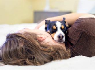 Kraftig ökning av juvertumör på hundar