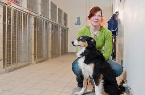 Arbetsmiljön inom djursjukvården brister: Anställda känner stress, hög arbetsbelastning och arbetar övertid
