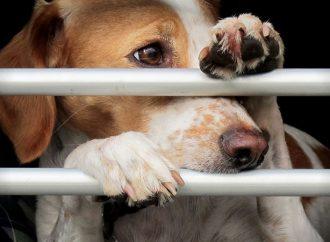 SVF fördömer illegal handel med hundar