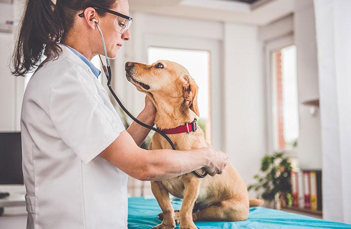 Nytt avtal för veterinärer 2020