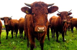 Alarmerande brist på veterinärer
