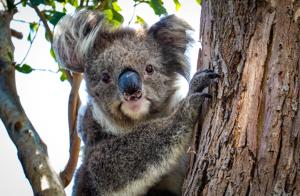 Evidensia skickar veterinärhjälp till Australien