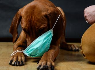 Respiratoriskt coronavirus hos hundar