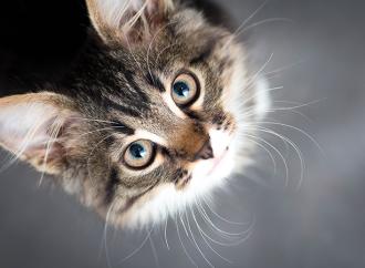 Nya regler för hund- och kattägare