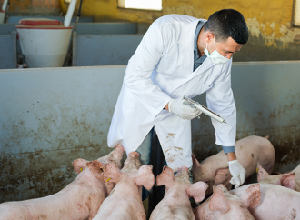 Ny rapport om antibiotikaanvändning i djurproduktion