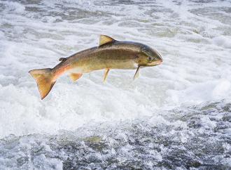 Bättre kunskap om fiskars hälsa
