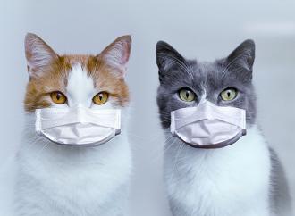 Katter smittade varandra med corona