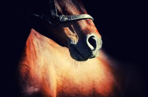 """Rekordlång avstängning för """"horse abuse"""""""