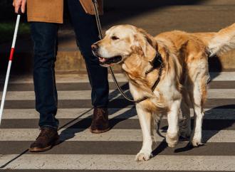 SLU-forskning kring sällskapsdjur får bidrag