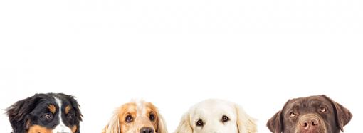 Samarbetar för bättre djurhälsa