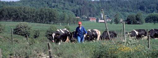 Jordbruksverket vill prioritera livsmedelsproduktionen och jordbrukets miljöarbete