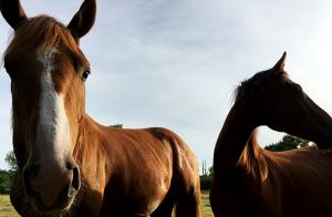 Remissyttrande:  Nej till svepande resonemang och oklara slutsatser om hästnäringen