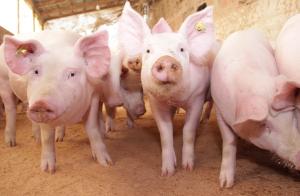 Skärpta kriterier för minskad antibiotikaanvändning i livsmedelsproduktion