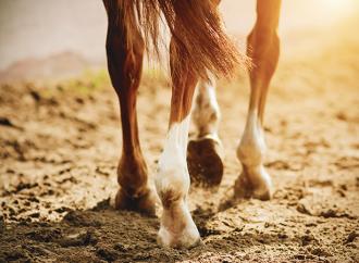 Ökad välfärd hos häst vid bättre hältdiagnostik