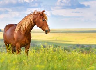 Stiftelsen Hästforskning beviljar medel till sju nya forskningsprojekt