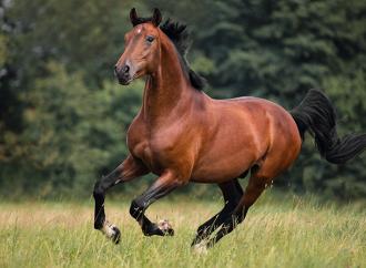SLU får bidrag till hästforskning