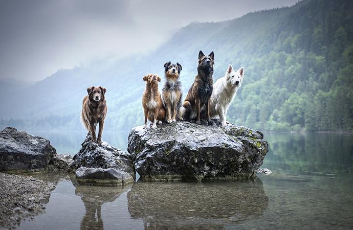 Hundforskningen får miljoner i bidrag