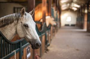 Tillfällig neddragning av hästklinikens verksamhet