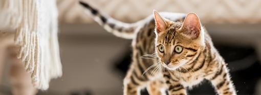 Regeringen lägger förslag om brott mot djur och ID-märkning av katt
