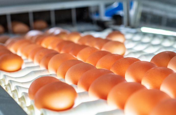 Äggproducenter kräver mer lokal äggproduktion för att minska effekterna av fågelinfluensan