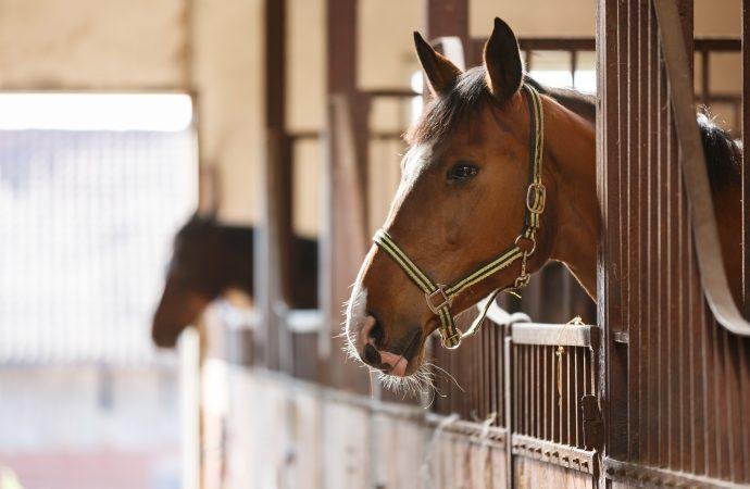 Rekommenderat smittskydd efter resor med häst