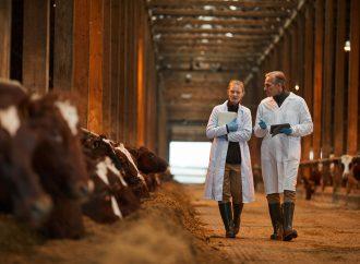 Jordbruksverket välkomnar rapport om tillgång till veterinär service